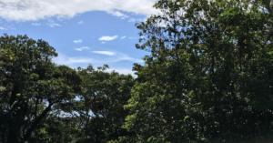 【20/6/5更新】樹木の在庫状況について